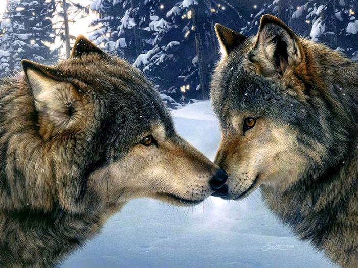 волки2 (700x525, 541Kb)