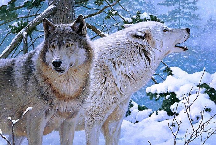 волки4 (700x471, 537Kb)