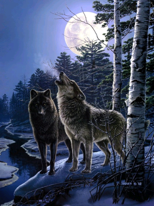 волки6 (523x700, 510Kb)