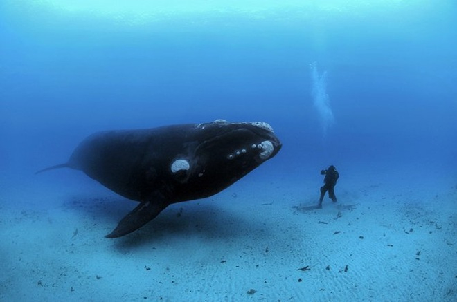 UnderwaterPhotographyByBrianSkerry23 (660x437, 157Kb)