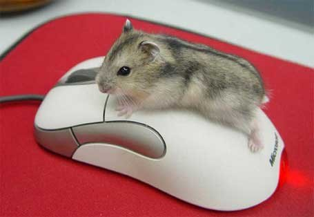 functions of a computer mouse / 3185107_kak_polzovatsya_komputernoi_mishu (455x314, 17Kb)
