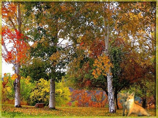 Отцвели цветы, падают листья, птицы молчат, лес пустеет и затихает.ОСЕНЬ. - Страница 2 104867204_23