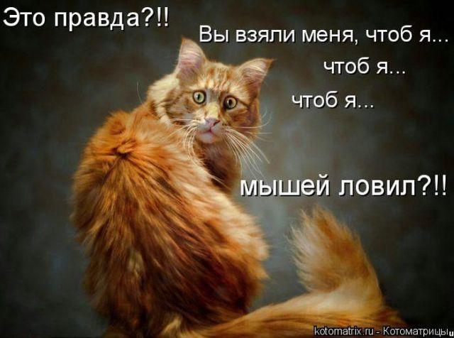 s3img_46944326_19717_1 (640x476, 44Kb)