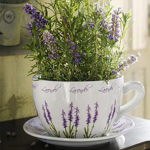 цветы в чашке 16 (500x500, 273Kb)