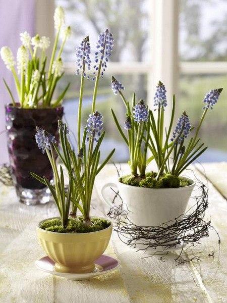 цветы в чашке 20 (450x600, 254Kb)