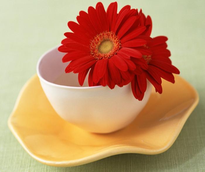 цветы в чашке 24 (700x589, 349Kb)