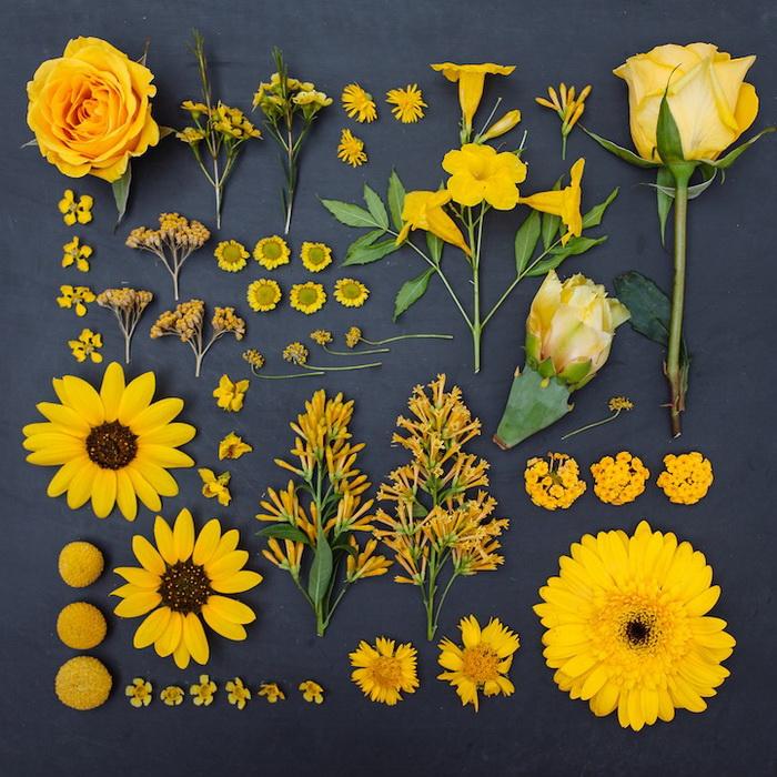 Монохромные картинки цветов 4