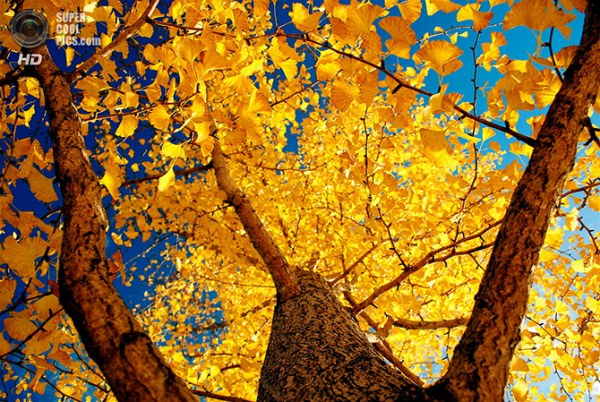 осень (600x402, 498Kb)