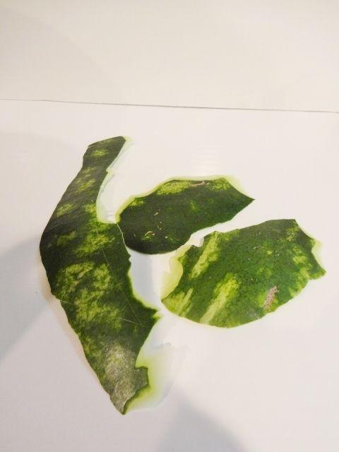 карвинг. розы из арбуза. салат из ананасов (15) (480x640, 118Kb)