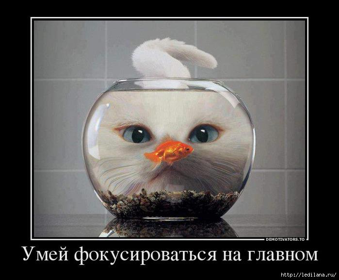 3925311_kote_v_akvariyme (700x577, 151Kb)