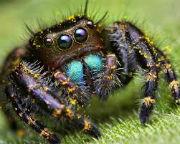 spider1 (180x144, 11Kb)