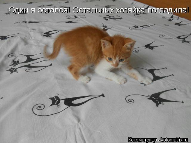 kotomatritsa_Gj (640x480, 94Kb)