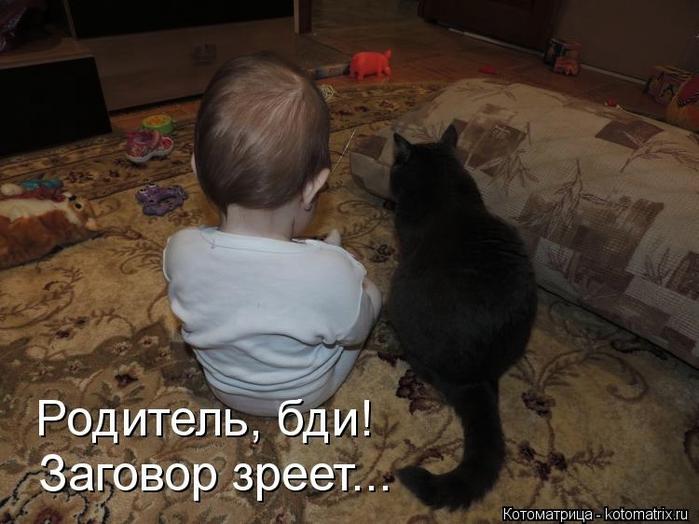 kotomatritsa_Oq (700x524, 228Kb)