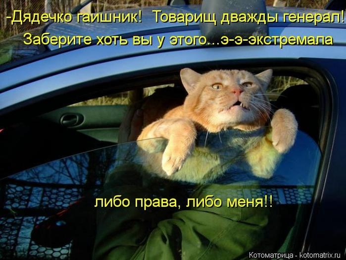 kotomatritsa_Pk (700x524, 261Kb)