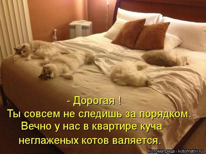 kotomatritsa_u (700x524, 255Kb)