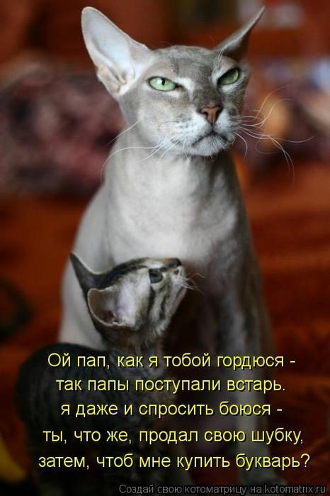 kotomatritsa_y (466x700, 197Kb)