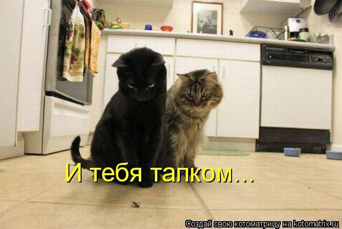 kotomatritsa_U2 (700x468, 116Kb)