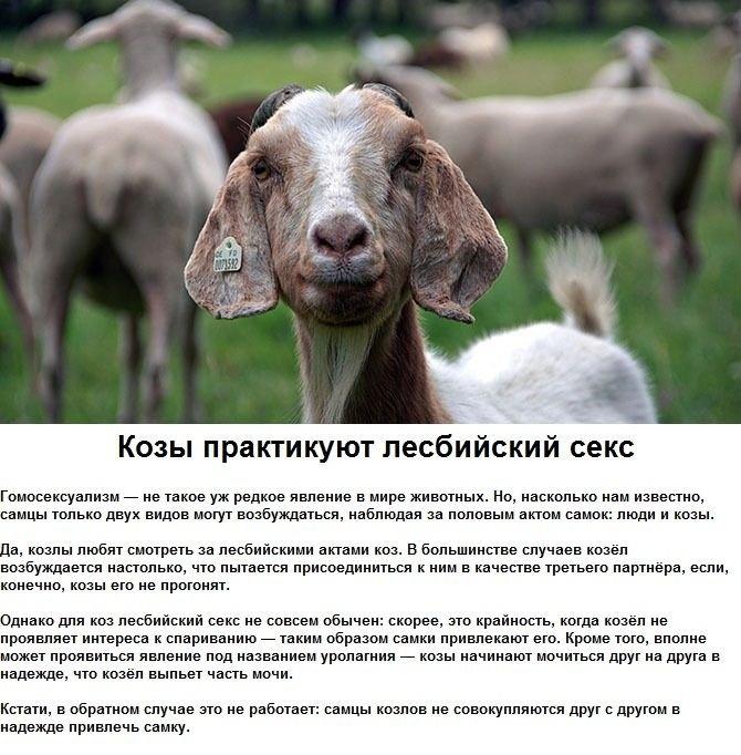 seksualnye_strannosti_zhivotnykh_6_foto_1 (670x682, 268Kb)