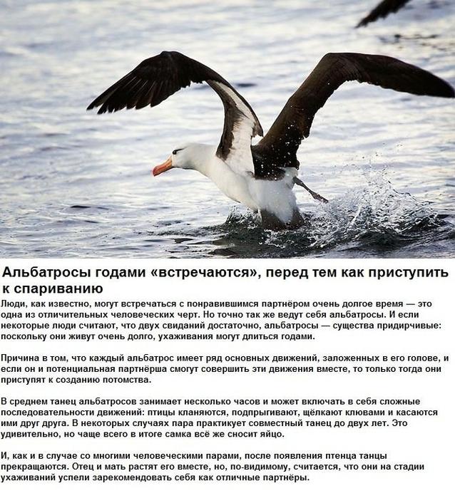 seksualnye_strannosti_zhivotnykh_6_foto_4 (638x700, 338Kb)