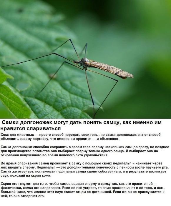 seksualnye_strannosti_zhivotnykh_6_foto_5 (581x700, 250Kb)