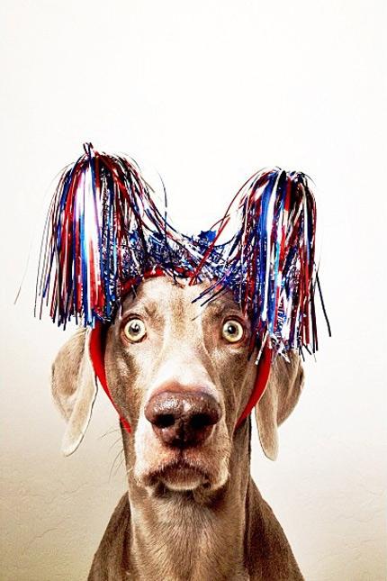 смешные собаки фото (430x645, 184Kb)