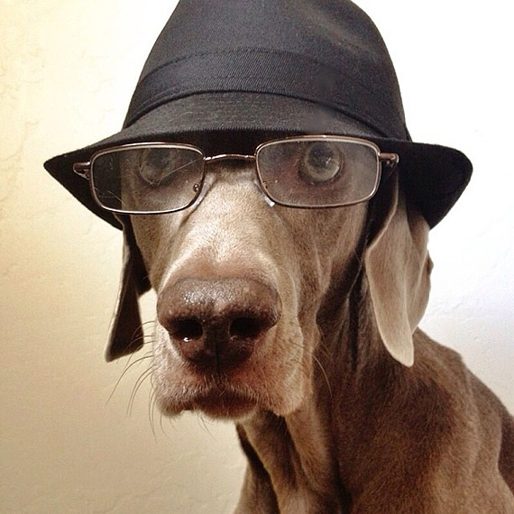смешные собаки фото 2 (570x570, 201Kb)