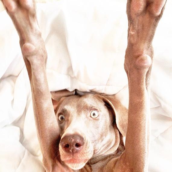 смешные собаки фото 4 (570x570, 179Kb)