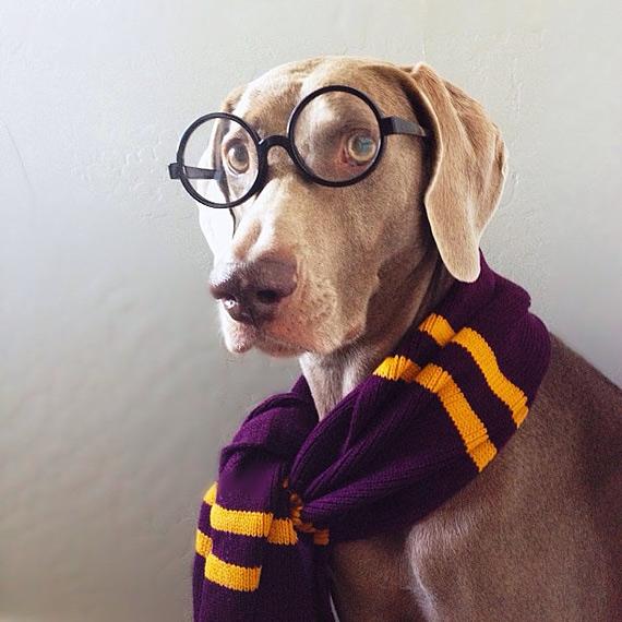 смешные собаки фото 6 (570x570, 199Kb)