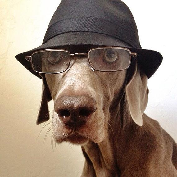 смешные собаки фото 8 (570x570, 201Kb)