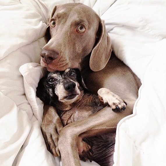 смешные собаки фото 10 (570x570, 214Kb)