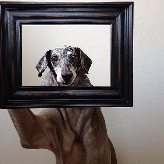 смешные собаки фото 12 (570x570, 212Kb)