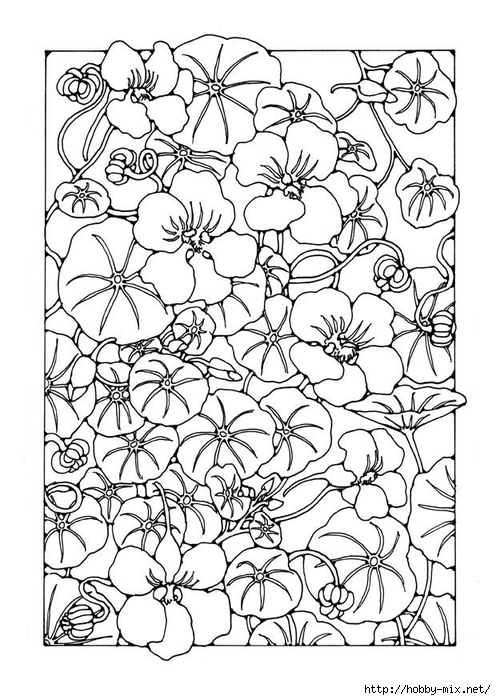 garden-nasturtium-27773 (496x700, 267Kb)