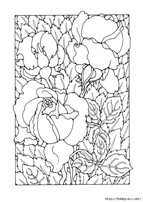 roses-27776 (496x700, 224Kb)