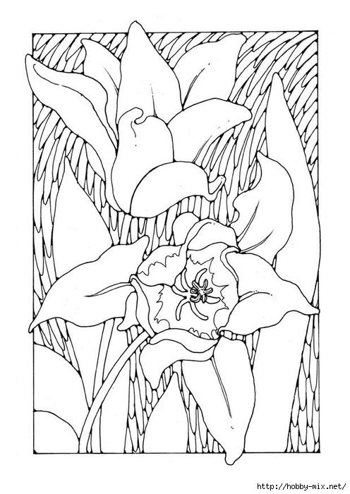 tulips-27779 (496x700, 192Kb)