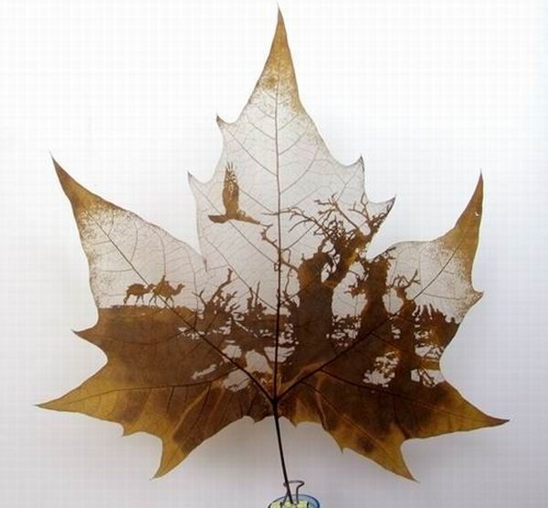 2190600_leaves_carving_masterpieces_06 (600x557, 40Kb)