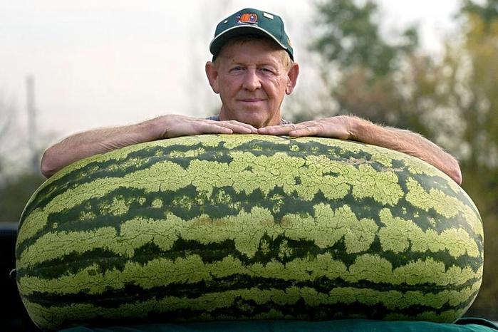 самый большой в мире арбуз 1 (700x466, 238Kb)