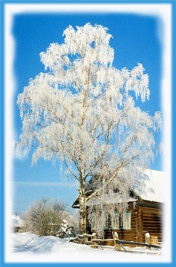 """Плейкаст """"Мягкий снег пушистый в воздухе летит, на деревьях стылых бахромой висит."""