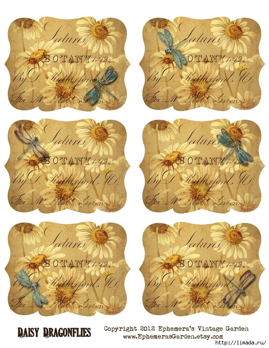 DaisyDragonflies (540x700, 355Kb)