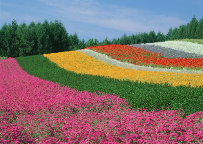 Времена года на острове Хоккайдо! Регион Furano и Biei !