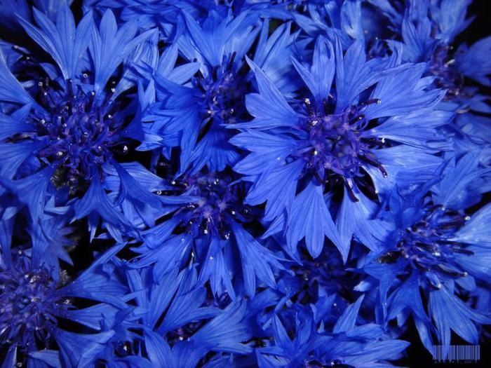 Красивые картинки синего цвета 4