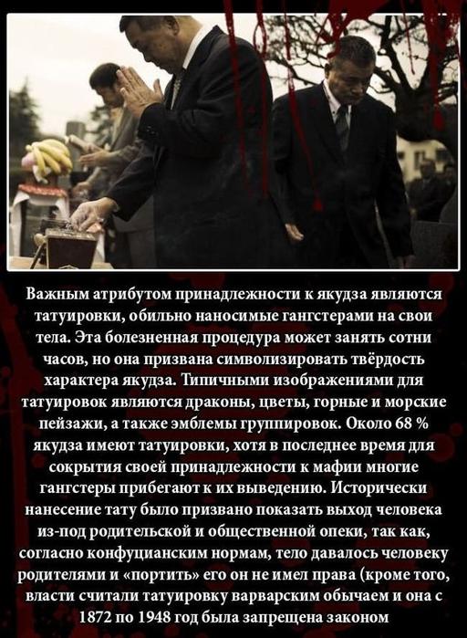 fakty_o_jakudze_11_foto_9 (512x700, 264Kb)