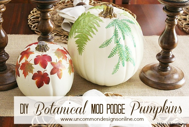 DIY_botanical_pumpkins_graphic (640x430, 250Kb)