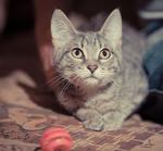 ������ Котенок Агнессы.раненый. Кошечка 001 (700x650, 533Kb)