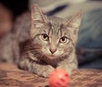 ������ Котенок Агнессы.раненый. Кошечка 004 (700x595, 516Kb)
