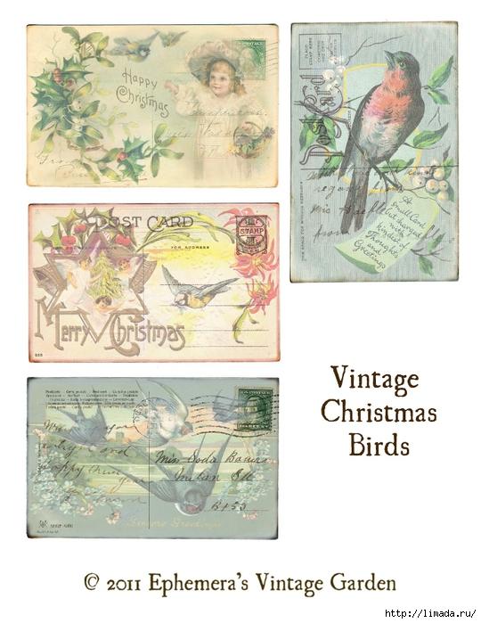 xmas birds (540x700, 258Kb)