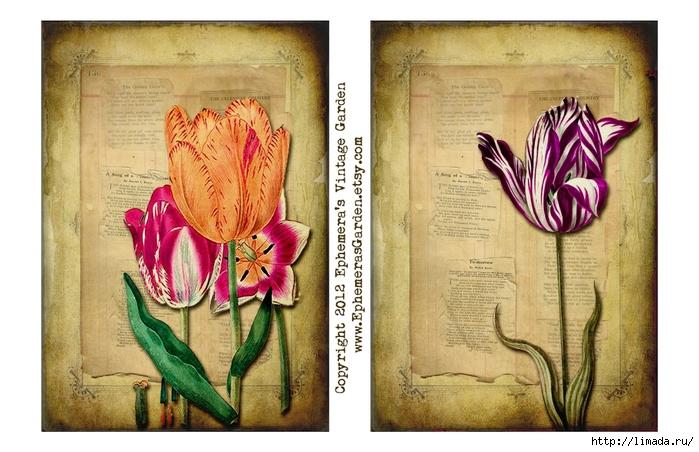 TulipsSheet (700x452, 263Kb)