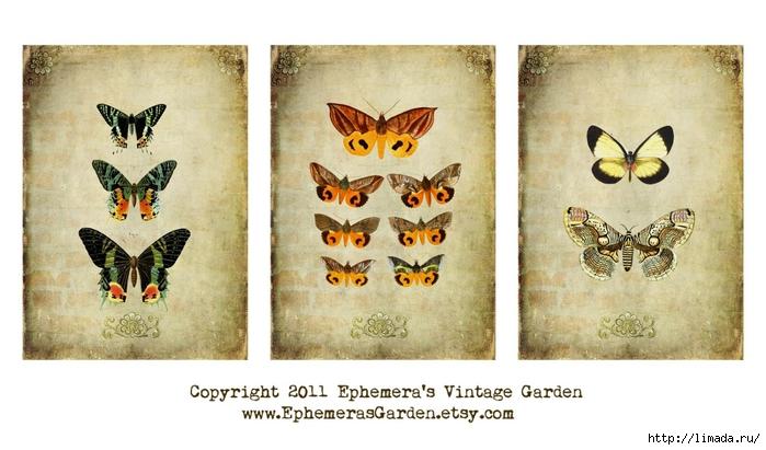 butterflySHEET (700x411, 213Kb)