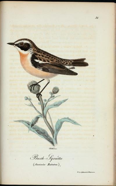 bird2 (399x640, 118Kb)