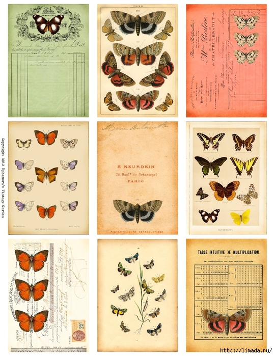 ButterflyEphemeraATC (540x700, 333Kb)