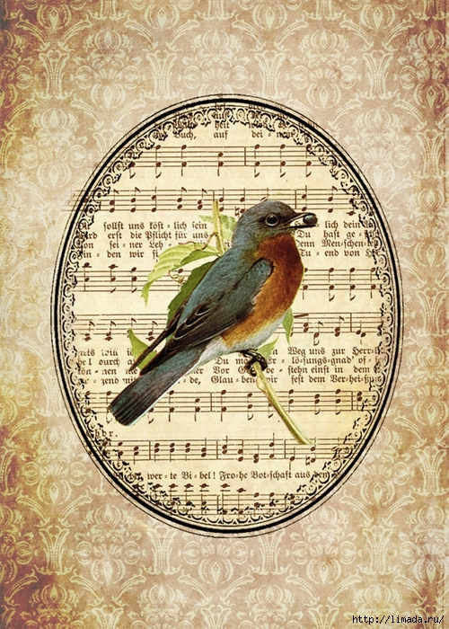 beige shabby songbird (500x700, 407Kb)